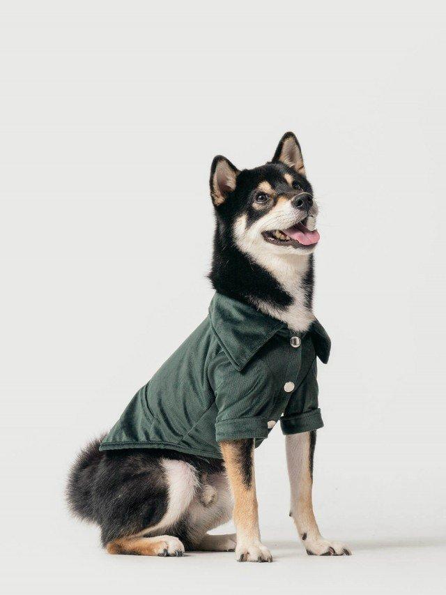 PEHOM 絨條紋襯衫 - 墨綠
